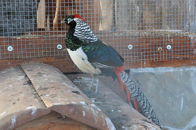 ptaki nowy sacz (3)